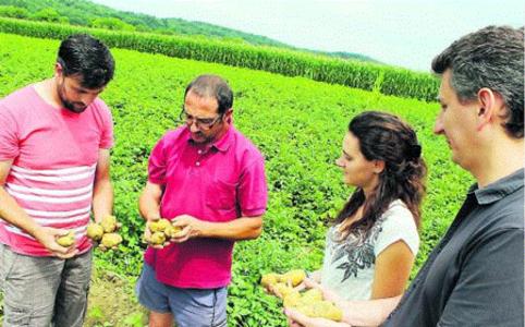 Lancement de la production de chips locales